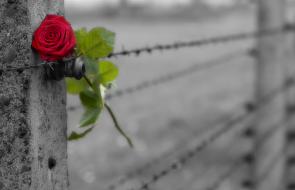 Miał zginąć w Auschwitz