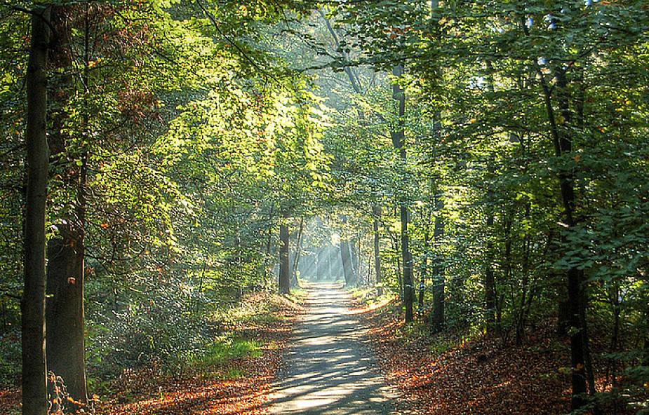 Lasy Państwowe wydadzą blisko 0,5 mld zł