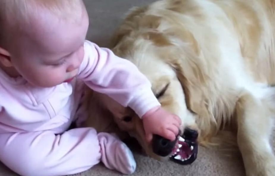 Najbardziej cierpliwy pies na świecie