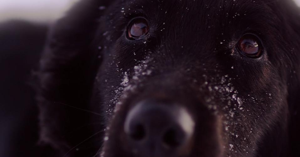 Pies, człowiek, góry i przygoda życia [WIDEO] - zdjęcie w treści artykułu nr 1