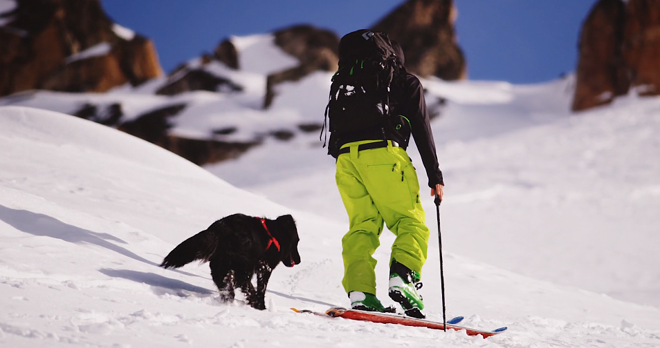 Pies, człowiek, góry i przygoda życia [WIDEO] - zdjęcie w treści artykułu