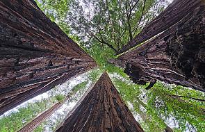 Martwe drewno ważniejsze, niż się wydaje