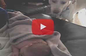 Co robi pies, gdy dziecko śpi [WIDEO]