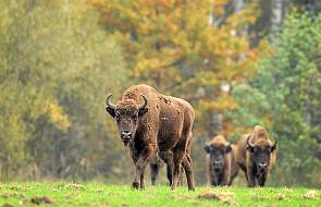 5 tys. ton karmy na zimowe dokarmianie zwierząt