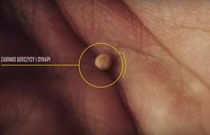 Zobacz, co wyrasta z najmniejszego ziarnka na świecie