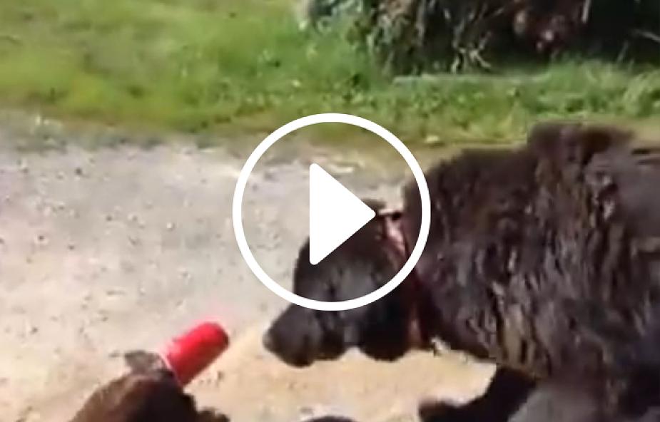 Pies wybawia kota z opresji (video)