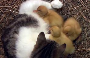 Przyjaźń silniejsza od instynktu [VIDEO]