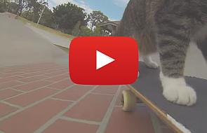 Kot, który ma niezwykłe hobby [VIDEO]