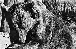 Pomnik niedźwiedzia Wojtka we Włoszech