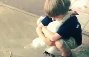 Mały chłopiec przytula kurę [VIDEO]