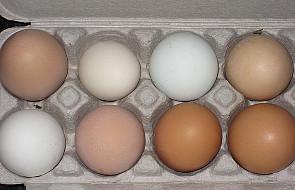 Polacy nie wiedzą, jakie kupują jajka