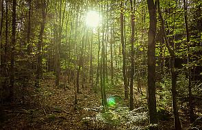 Apel o nieużywanie ognia w lasach