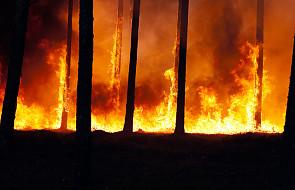 Rozprzestrzeniają się pożary lasów na Syberii