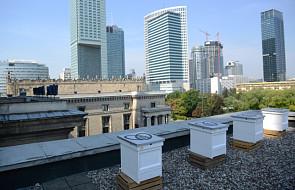 Miejskie pszczoły na dachu Pałacu Kultury i Nauki