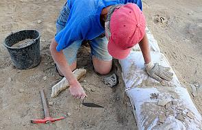 Najważniejsze odkrycia archeologiczne na wystawie