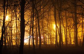 Ukraina: pożary wokół Kijowa zadymiły miasto