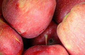 USA: postęp w otwarciu rynku dla polskich jabłek