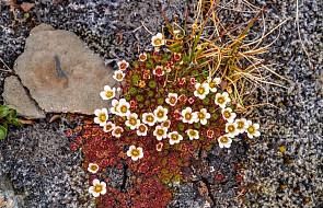 Epicki projekt botaniczny w Arktyce