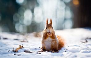 Rozpoczęła się kalendarzowa zima