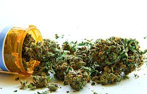 Komisja sejmowa: projekt o leczniczej marihuanie