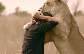 Czy można się zaprzyjaźnić z... lwem? [WIDEO]