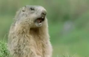 Ten film ze zwierzętami rozłoży was na łopatki! [WIDEO]