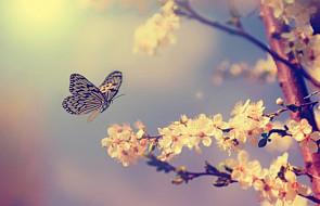 Jak motyle uchronią przed fałszowaniem pieniędzy?