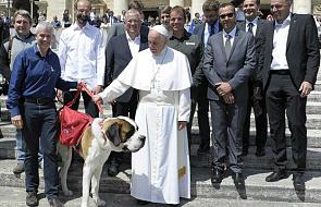 """Papież """"przyjął"""" na audiencji psa bernardyna"""
