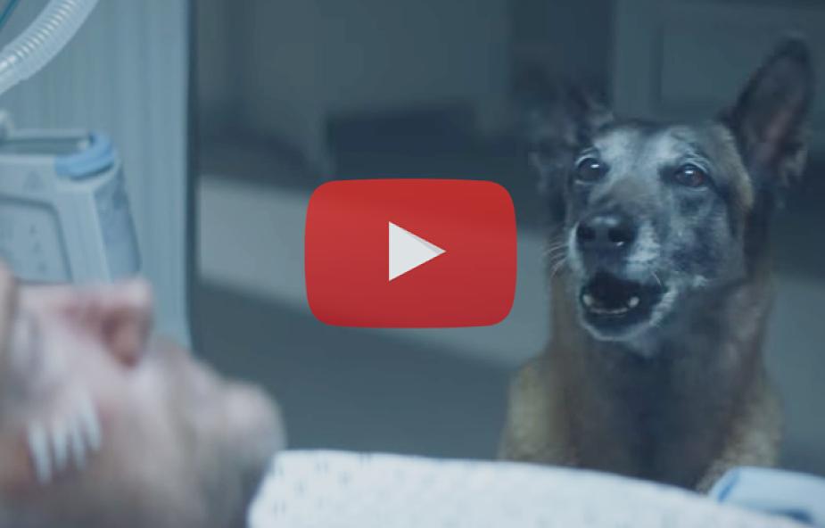 Wzruszająca kampania o złym traktowaniu zwierząt [WIDEO]