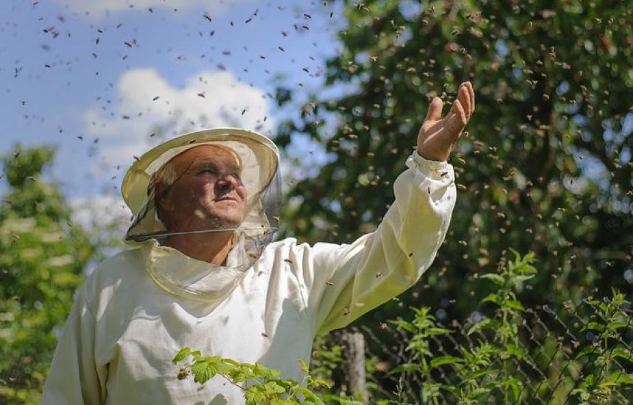 Polscy naukowcy uchronią pszczoły