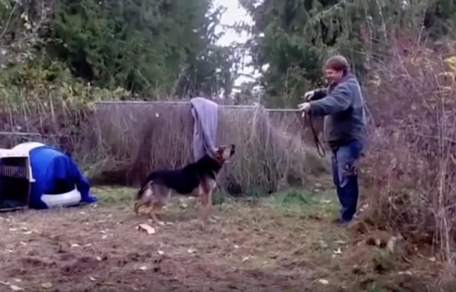 Wzruszająca reakcja psa wypuszczonego na wolność [WIDEO]