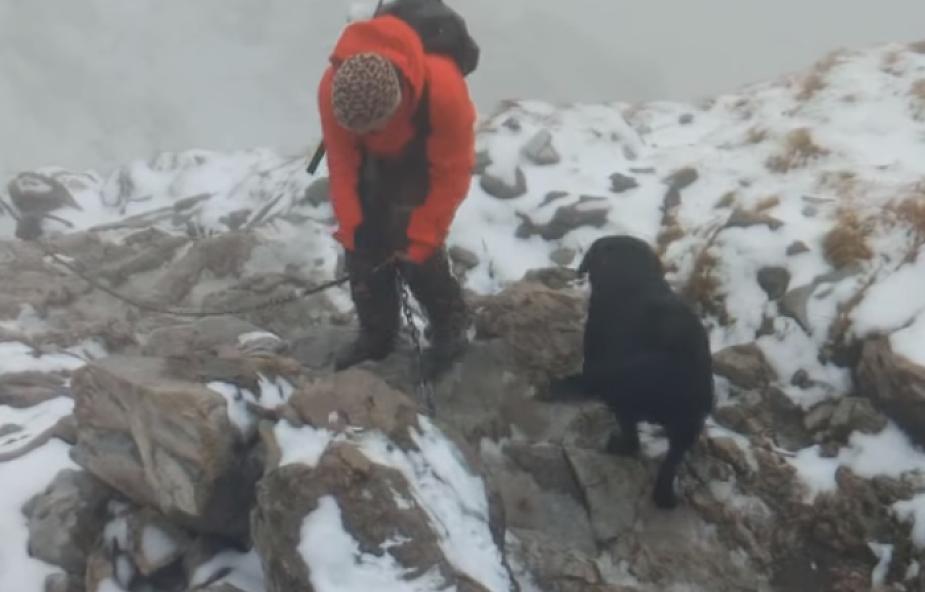 Zagubiony w Tatrach pies stał się gwiazdą Internetu [WIDEO]