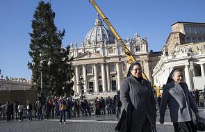 Watykan: ozdoby z Werony udekorują polską choinkę na placu św. Piotra