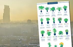 Masz dość smogu? Te domowe rośliny pomogą ci oczyścić powietrze