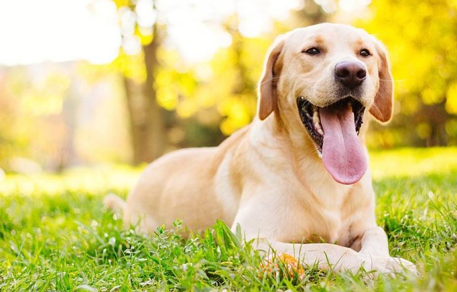 2 minuty, dzięki którym zapragniesz mieć psa [WIDEO]