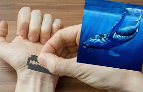 """Prokuratura ostrzega: """"Niebieski wieloryb"""" dotarł do Polski"""