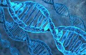 Lepiej poznano rolę szpulek, na które nawinięte są nici DNA