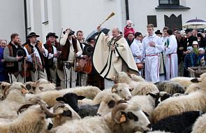 Święto Bacowskie z poświęceniem stada owiec