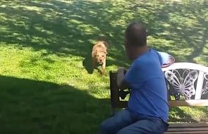 To odwód, że pies nigdy nie zapomina o swoim właścicielu [WIDEO]