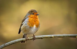 Jak zacząć podglądać i fotografować ptaki?