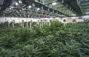 Na giełdzie w Toronto można inwestować w marihuanę
