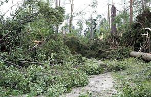 Lasy Państwowe: po nawałnicach wstępne straty w drewnie opiewają na 6,6 mln m sześc.
