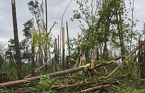 Po wichurach Lasy Państwowe spodziewają siękradzieży: wprowadzamy stan siły wyższej