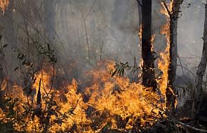 Czarnogóra: Polak zatrzymany w związku z pożarem lasu