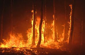 Unia Europejska wysyła samoloty do walki z pożarami lasów we Włoszech