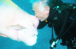 Od 25 lat przyjaźni się z rybą, której uratował życie [WIDEO]