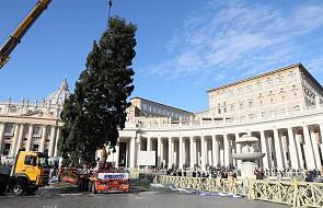 Watykan: już rozebrano polską choinkę na placu św. Piotra
