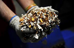 Podlaskie: KAS udaremnił próbę przemytu ponad 400 tys. paczek papierosów. W naczepie miało być co innego