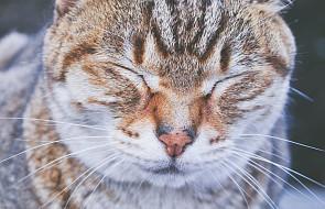 Co Pismo Święte mówi o kotach? [WIDEO]