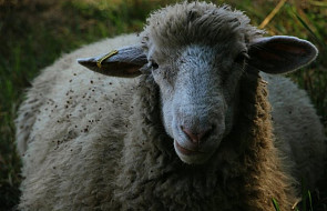 Szymon Hołownia o tym, czy zwierzęta mają duszę i skąd wziął się ubój rytualny